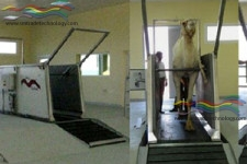 Treadmill for Camel – Tappeto Mobile per Cammelli