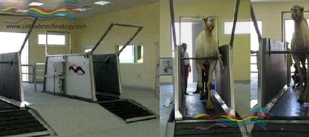 Treadmill – Tappeto Mobile per Cammelli
